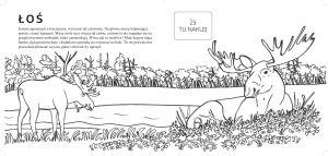 autorka-rysunkow-do-kolorowania-jest-marta-gorska