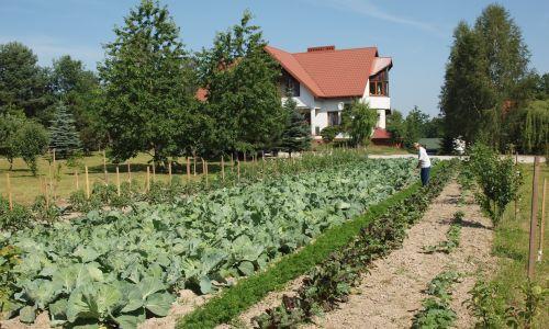 Mamy cztery domy mieszkalne, w których jest ponad 30 osób. Naszą pracą jest między innymi uprawa ogródka. Fot. Zbigniew Drążkowski/Zasoby Emaus