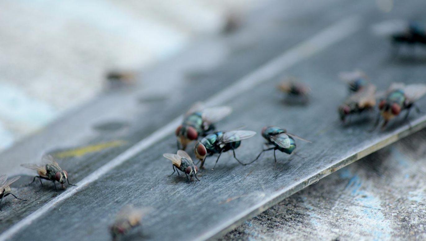 Odkrycie nowego gatunku muchy (fot. Shutterstock)