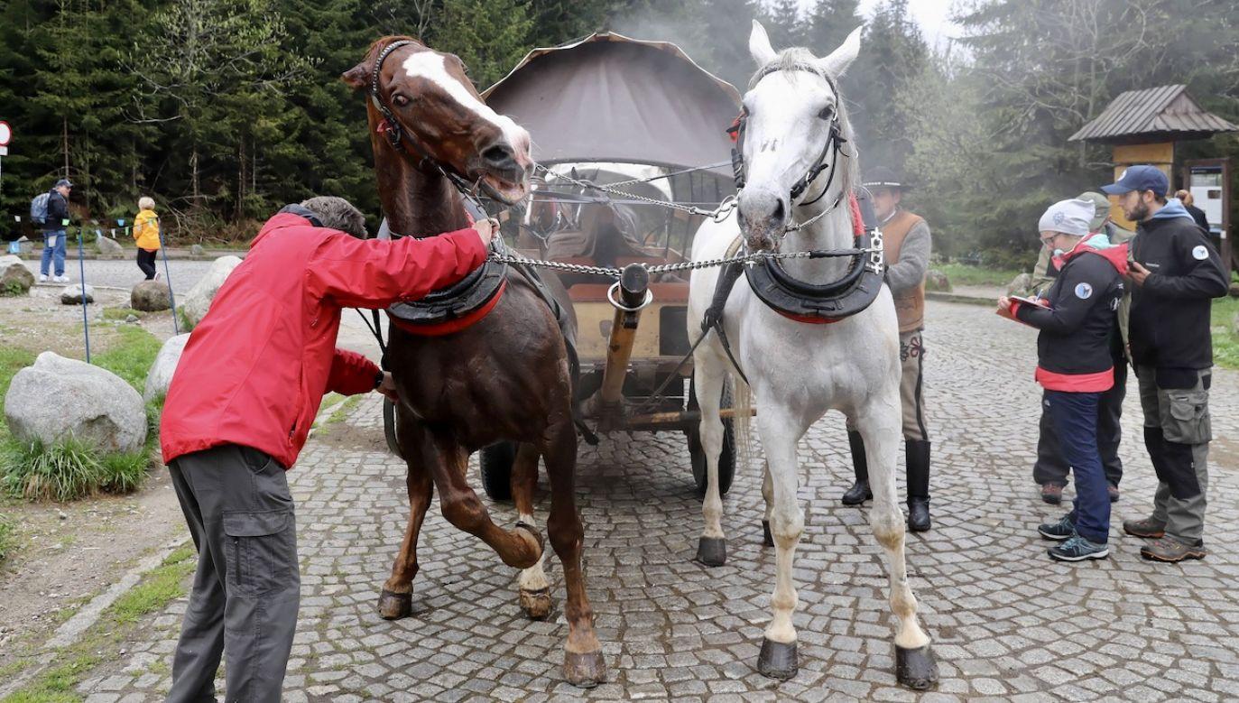 Sytuacja miała miejsce w Dolinie Chochołowskiej (fot. arch.PAP/Grzegorz Momot, zdjęcie ilustracyjne)
