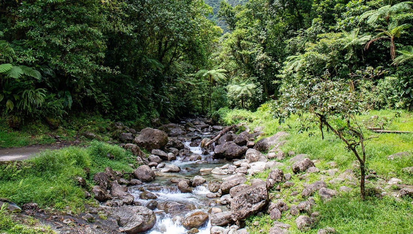 Przepływ wody w rzekach na Martynice jest bardzo niski (fot. Shutterstock/chromoprisme)