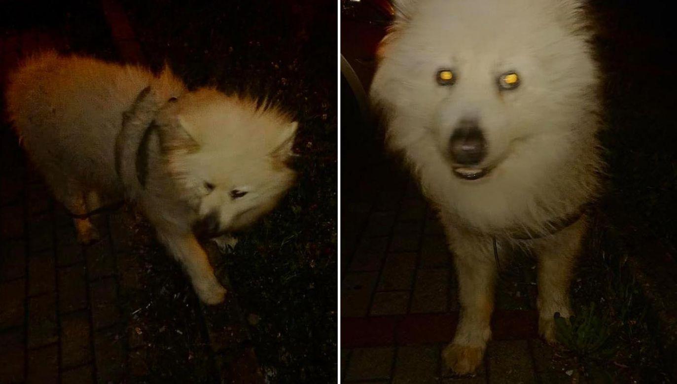 Zwierzę opadło z sił i odmówiło dalszej wędrówki (fot. Facebook/GOPR Beskidy)