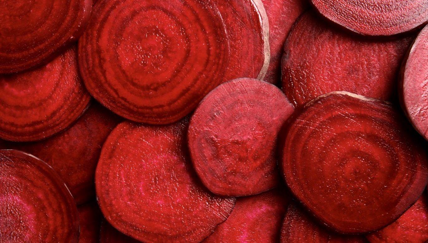 Burak ćwikłowy jest wykorzystywany powszechnie w przemyśle przetwórczym (fot. Shutterstock/Africa Studio)