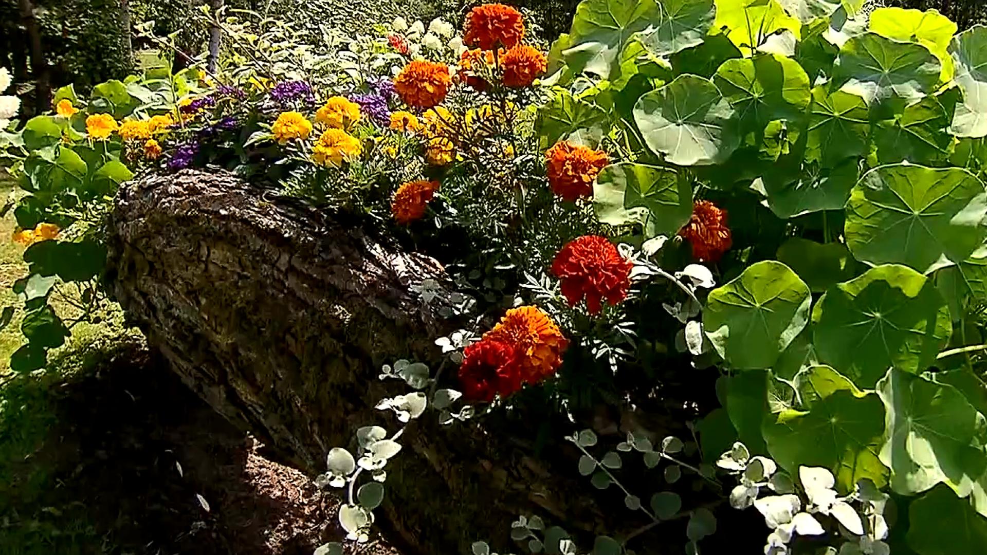 Rok w ogrodzie - extra, 16.11.2019