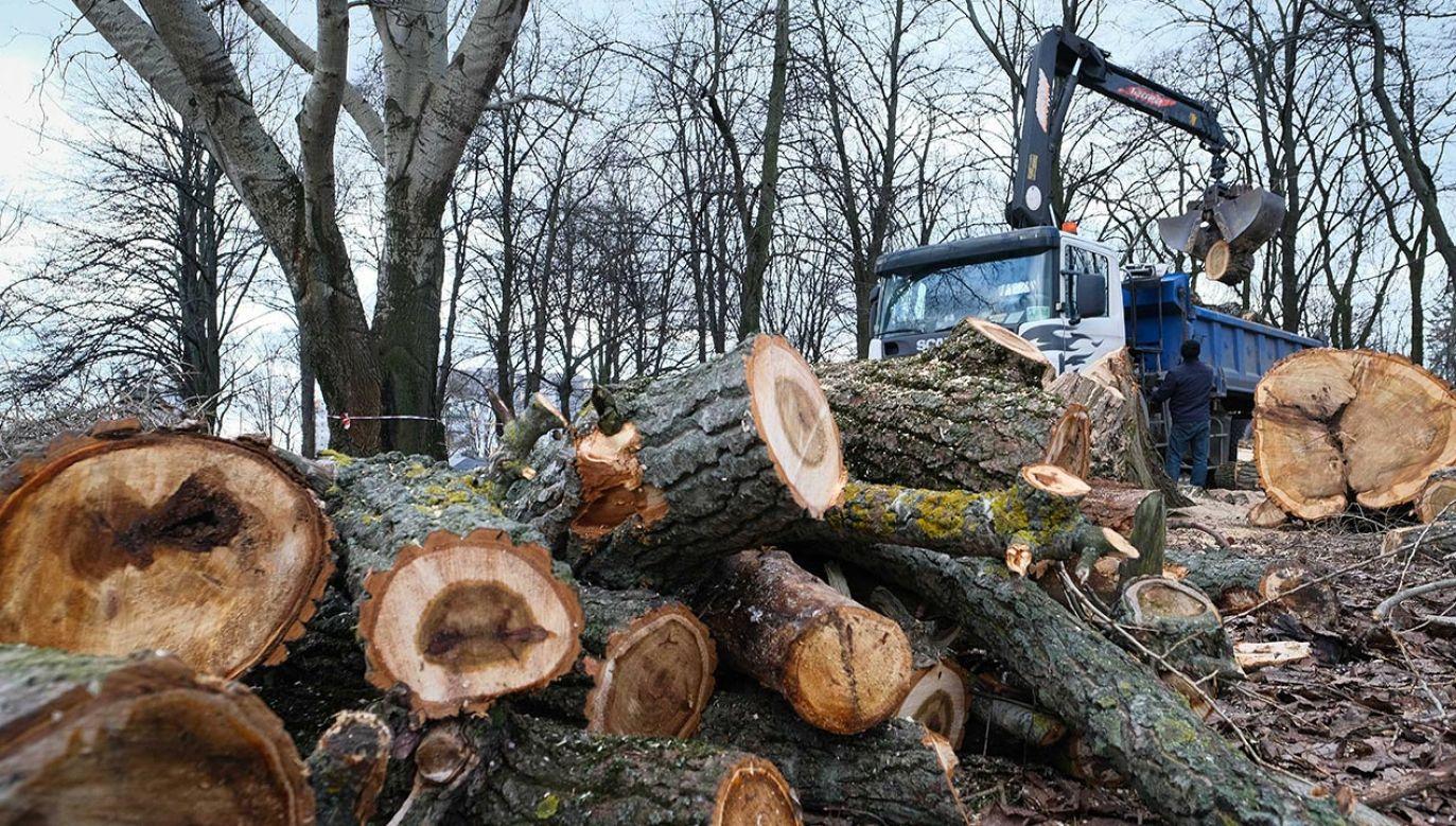 Późną zimą w pobliżu Wisły w Warszawie wycięto kilkaset drzew (fot. PAP/Mateusz Marek)