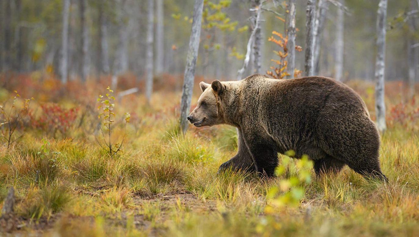 Zwierzę zastrzelili myśliwi (fot. Shutterstock/David Havel)
