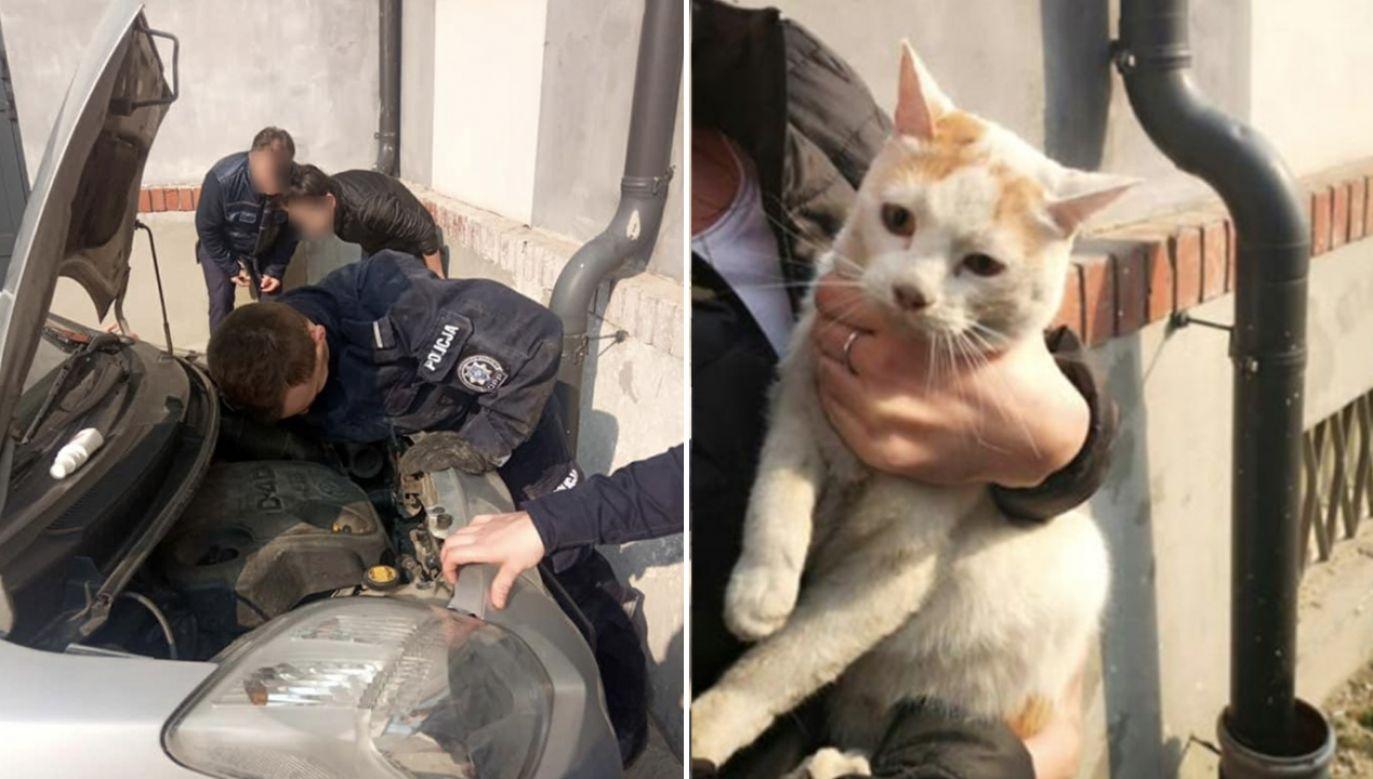 Zwierzęciu nic się nie stało (fot. Policja)