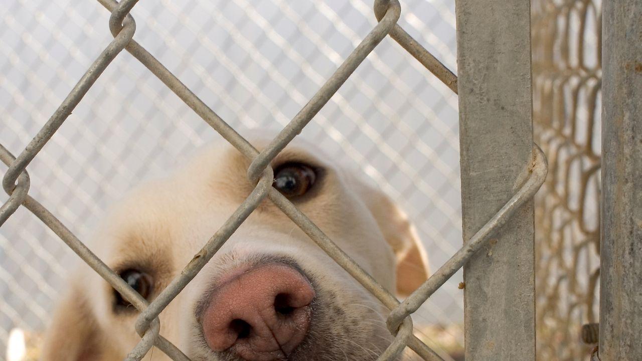 Zdaniem organizacji prozwierzęcych, w schroniskach giną dziesiątki tysięcy psów rocznie (Fot. Wikipedia)