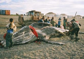 The Whale from Lorino