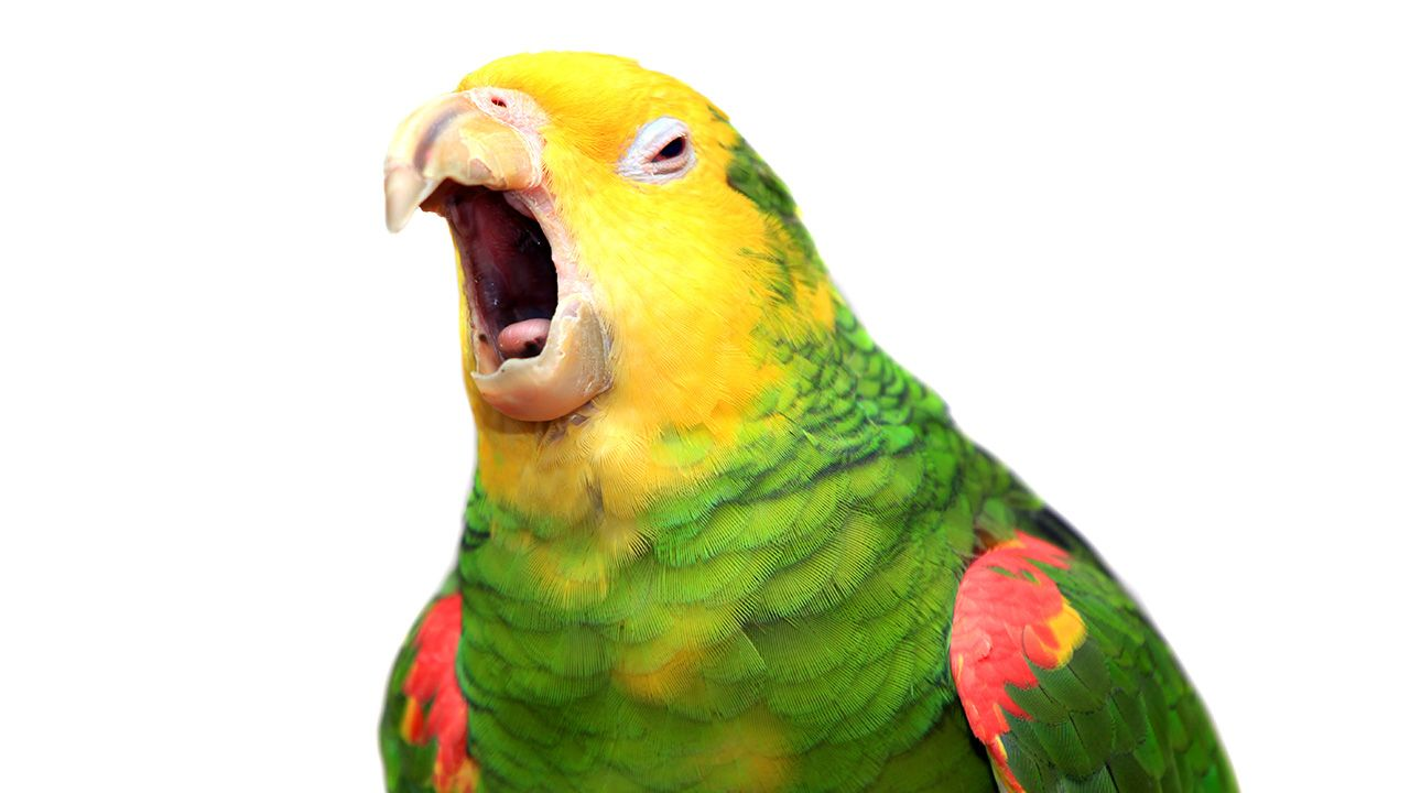 Zwierzę zostało przekazane do lokalnego zoo (fot. Shutterstock/Rosa Jay)