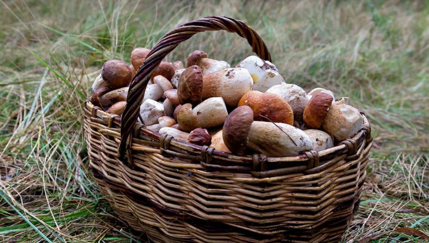 Straż leśna skonfiskowała ponad 130 kilogramów grzybów (fot. Shutterstock/loliti)