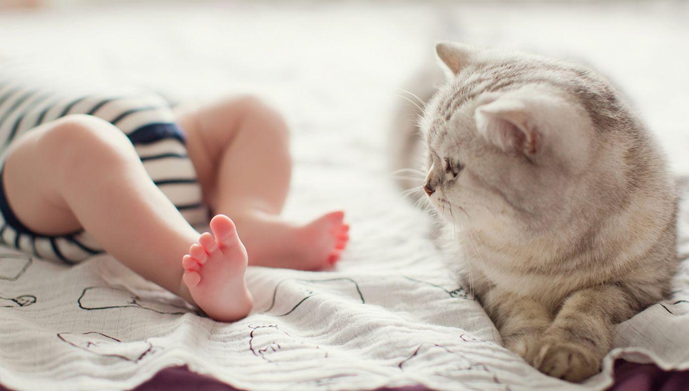 """""""Gdyby nie kot, mój syn spadłby ze schodów"""" (fot. shutterstock/aprilante)"""