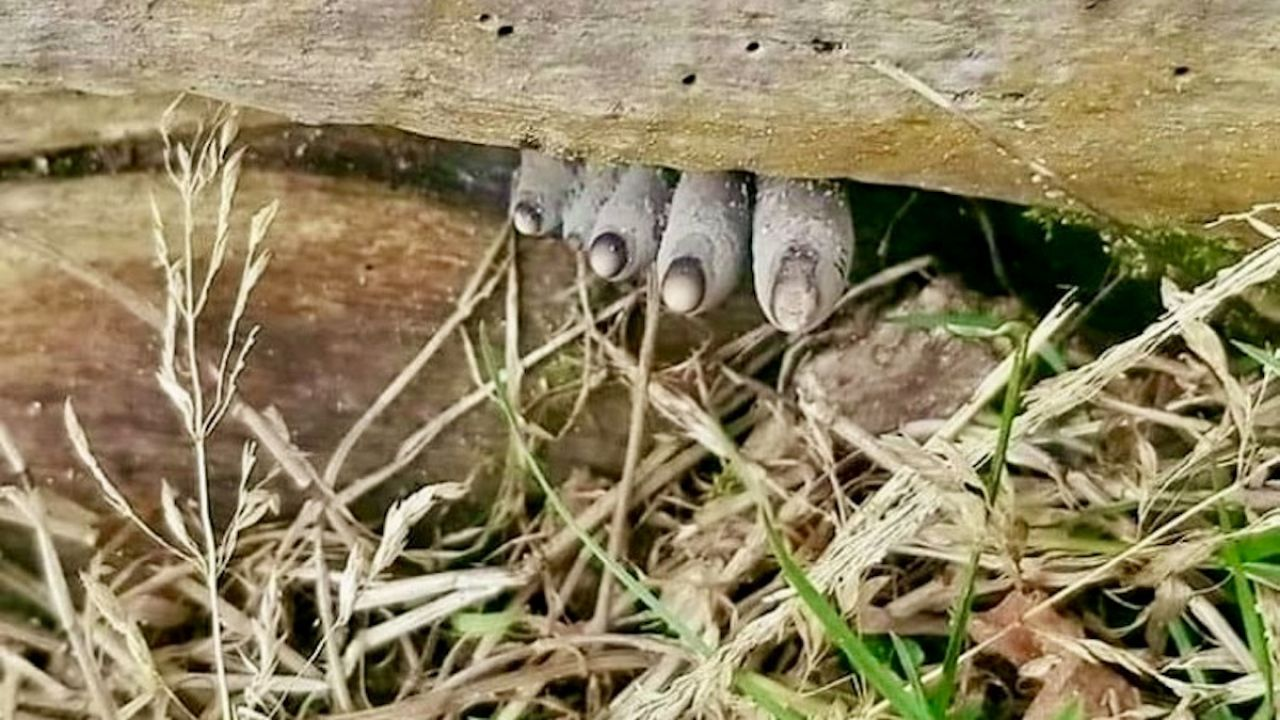 Grzyb wyglądają dość osobliwie (fot. FB/Nadleśnictwo Szubin, Lasy Państwowe)