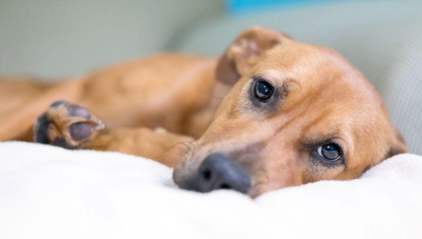Konał na oczach swoich oprawców (fot. Shutterstock/Mary Swift)