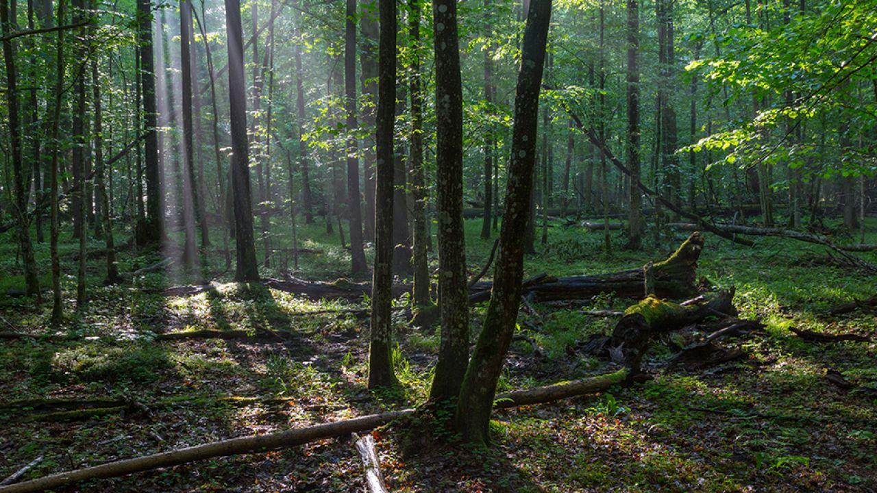 Zarażone drzewa trzeba usunąć jeszcze w tym roku – powiedział minister (fot. Shutterstock/Aleksander Bolbot)