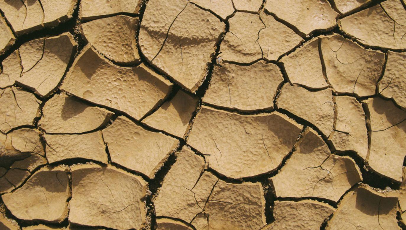 Fale upałów w wielu częściach Unii Europejskiej powodują suszę i straty dla rolników (fot. Pexels)