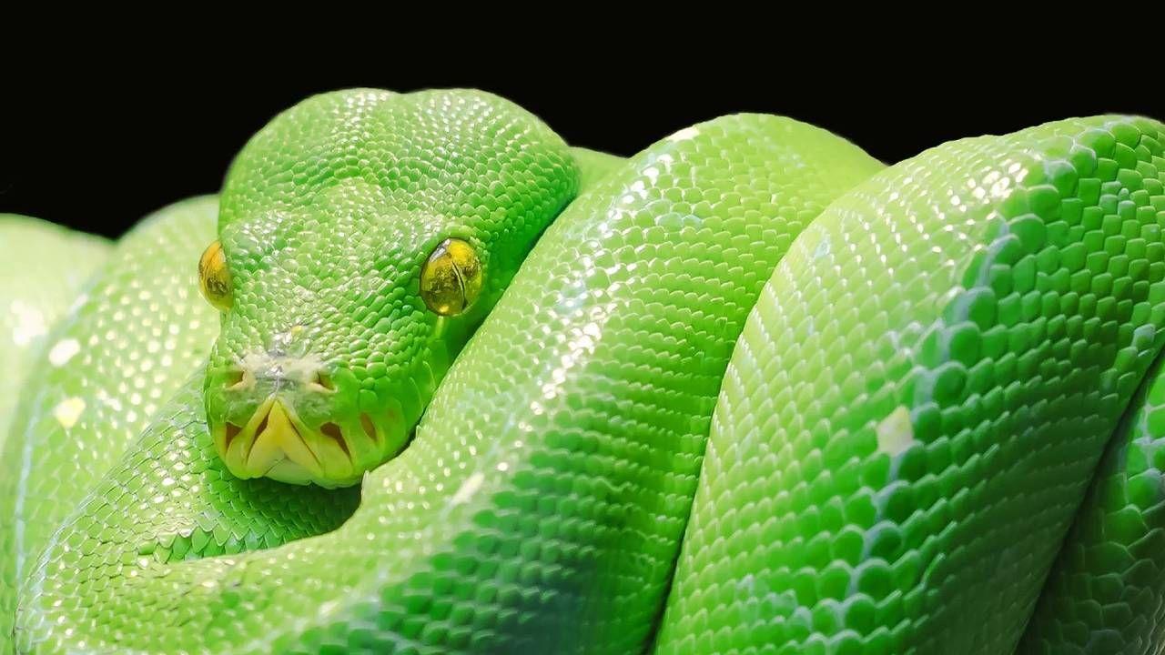 Węże przeżyły zagładę dinozaurów (fot. Pexels)