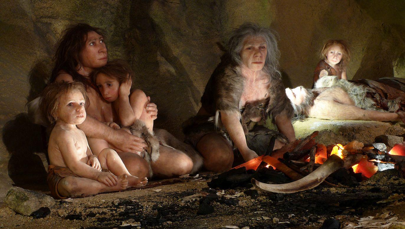 Wystawa prezentująca  życie rodziny neandertalczyków w jaskini w Muzeum Neandertalczyków w Chorwacji (fot. REUTERS/Nikola Solic)
