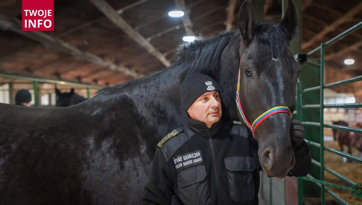 Evento, Pasat, Bachmat, Falcon, Kaprys, Wasal, Korynt oraz Feniks to konie, które pełnią służbę w dwóch bieszczadzkich placówkach SG (fot. Twoje Info)