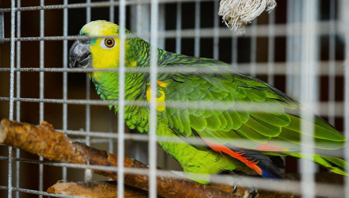 Para rzekomo torturowała dziewczynkę, ponieważ przypadkiem wypuściła ona z klatki cztery papugi, które kosztowały 64 tys. rupii (fot. Shuttertsock/Oksana Lavrova_2020)