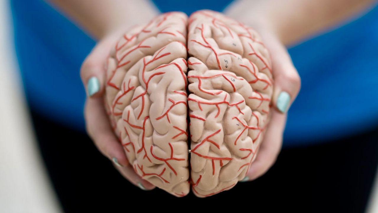 Z perspektywy ewolucyjnej ludzki mózg jest dość młody (fot. M.Horwood/Getty Images)