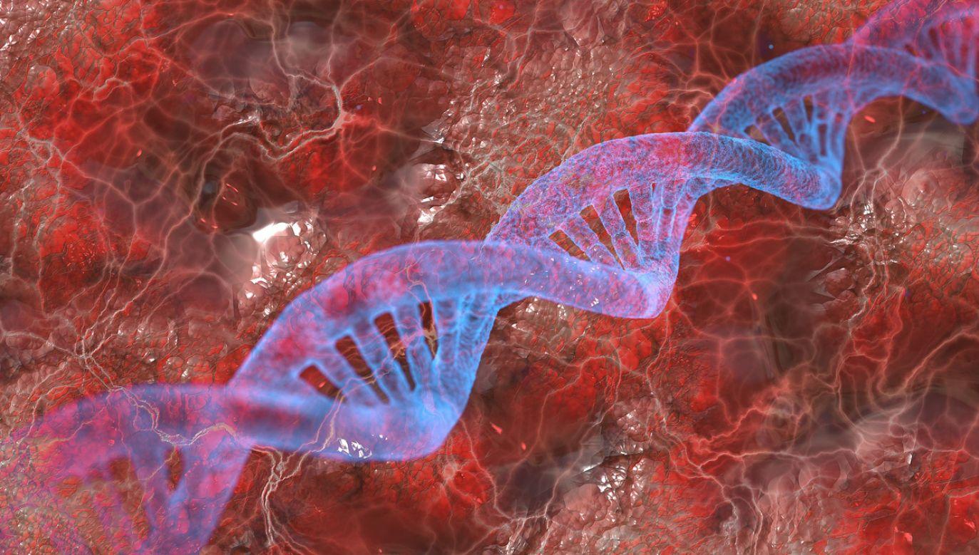Naukowcy szukali wariantów genetycznych będących wyznacznikiem homoseksualizmu (fot. Pixabay/geralt)