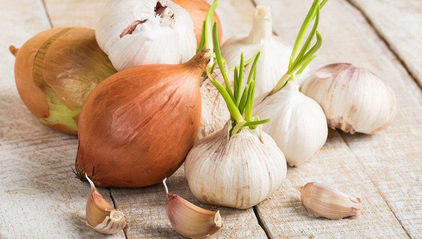 W oparciu o średniowieczną recepturę badacze sporządzili leczniczą miksturę na bazie naturalnych składników (fot. Shutterstock/Antonova Ganna)