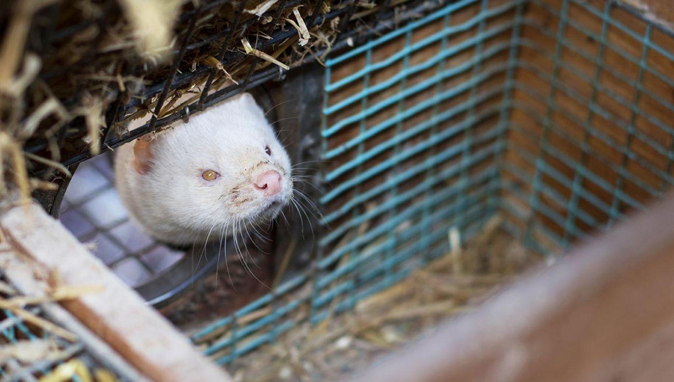 O uciążliwym sąsiedztwie ferm zwierząt futerkowych (fot. Shutterstock/Line Holm Poulsen)