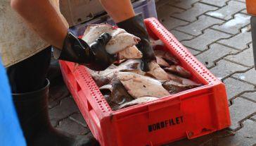 Zakazy i limity połowów odbijają się na dochodach rybaków (fot. PAP/Marcin Bielecki)