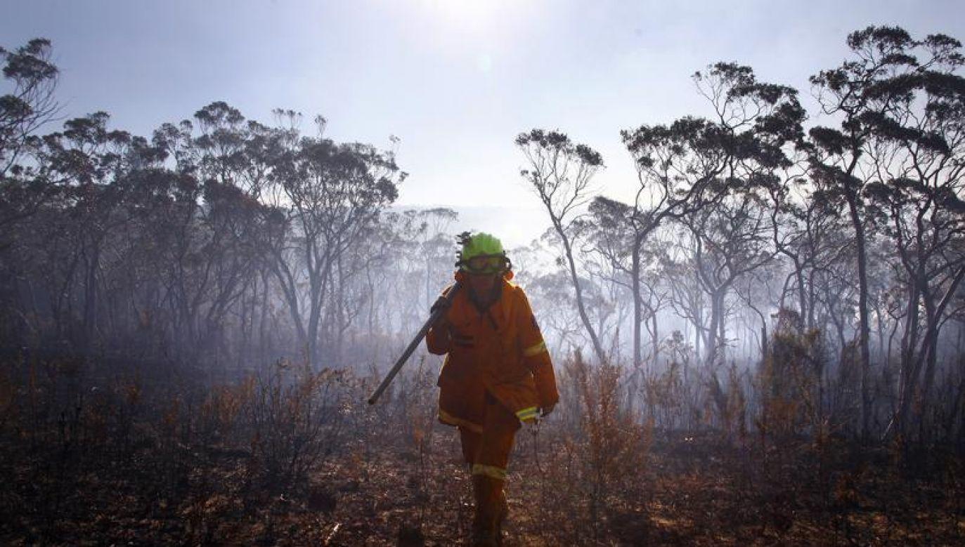 Według policji niektóre pożary zostały wzniecone celowo (fot. REUTERS/David Gray)