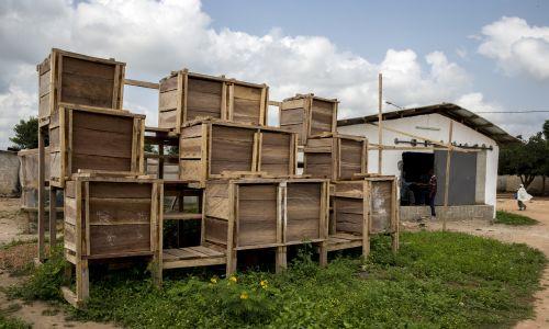 Wybrzeże Kości Słoniowej. Zbiorniki do fermentacji kakao. Fot. Godong / Universal Images Group via Getty Images