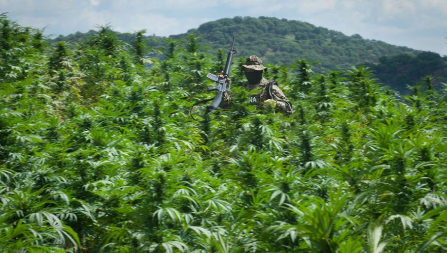 Uprawa, przemyt i handel narkotykami zapewnia kartelom miliardowe zyski (fot. Sarah L. Voisin/The Washington Post/Getty Images)