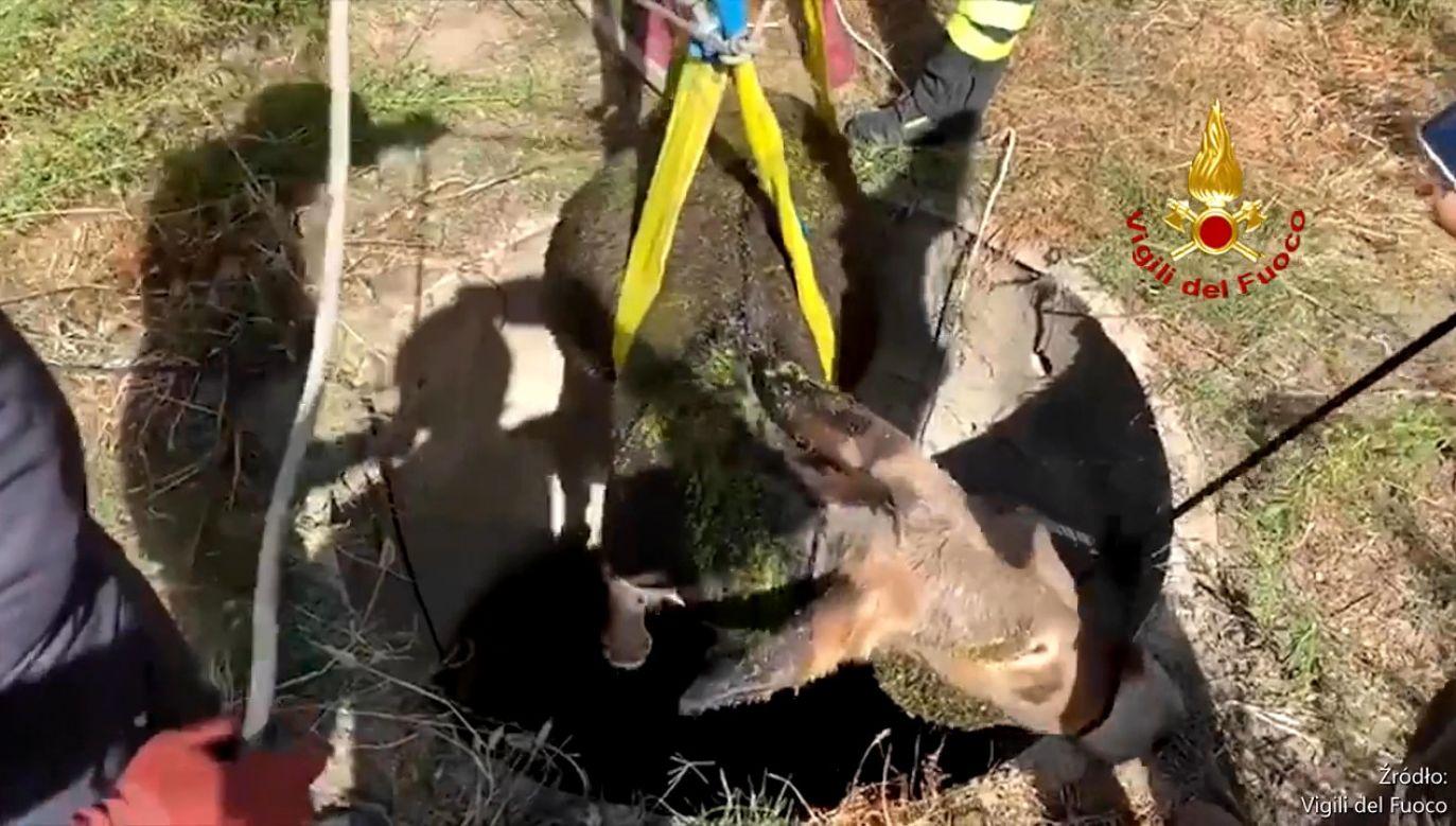 Włoscy strażacy wyciągnęli osła ze studni na Sardynii (fot. Vigili del Fuoco)