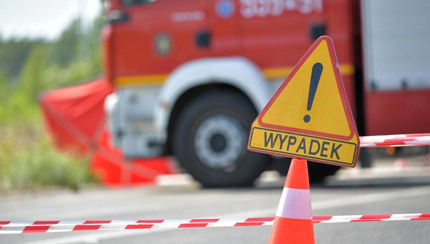 Uderzenie było tak silne, że kierowca nie przeżył wypadku; padło też zwierzę (fot. PAP/Przemysław Piątkowski)