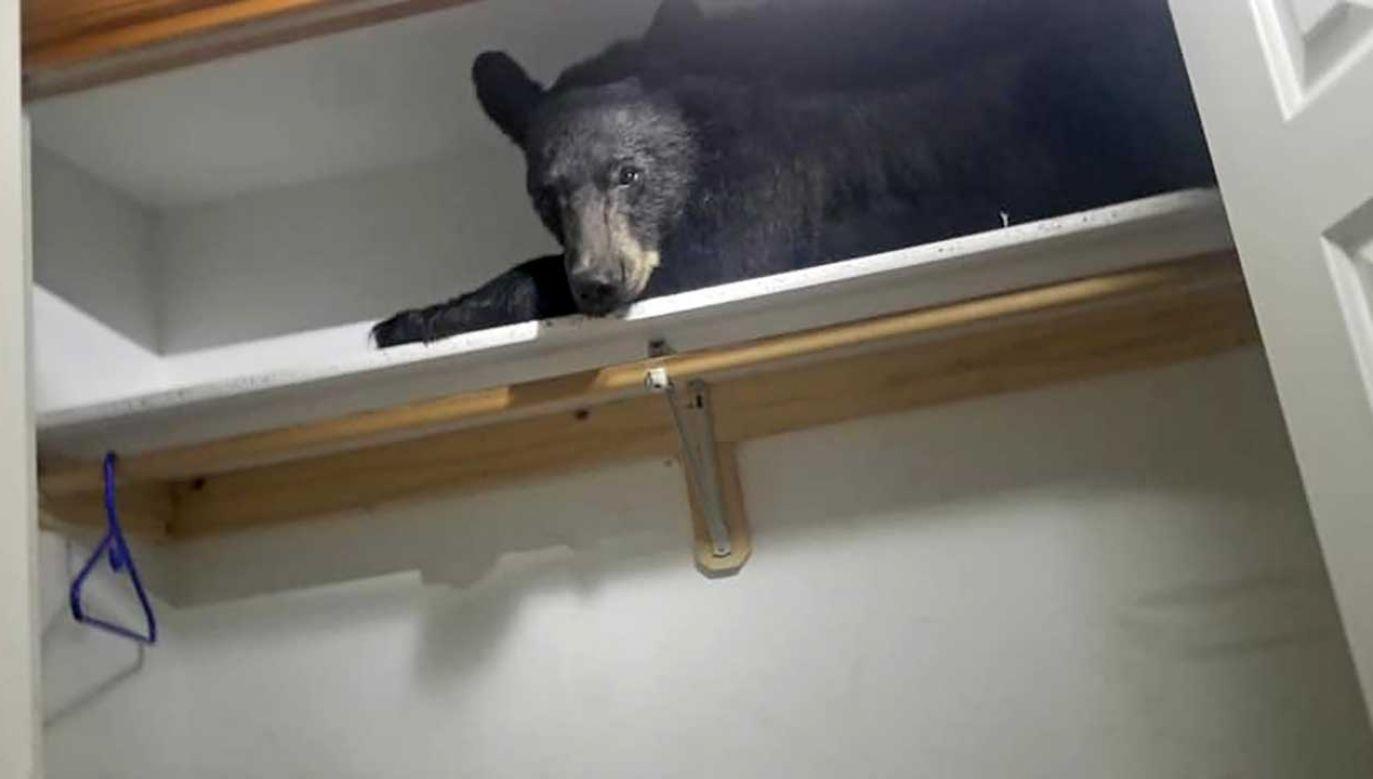"""""""Kiedy po raz pierwszy podeszliśmy i zobaczyliśmy go w szafie, zaczęliśmy się śmiać"""" (fot. FB/Missoula County Sheriff's Office)"""