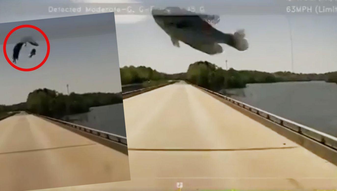 Ryba odbiła się od ciężarówki w Karolinie Północnej (fot. EBU / Ward Transport)
