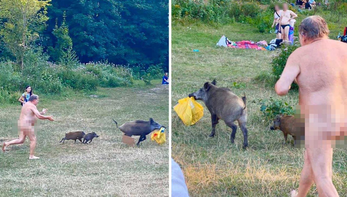 Po wprowadzeniu ograniczeń związanych z pandemią koronawirusa zwierzęta stały się odważniejsze (fot. Facebook/ Adele Landauer)