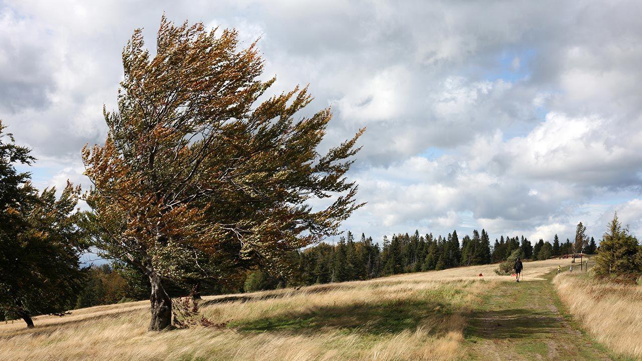 Będzie cieplej, więcej słońca i bardzo wietrznie. IMGW ostrzega (fot. Forum/Jerzy Pawleta)