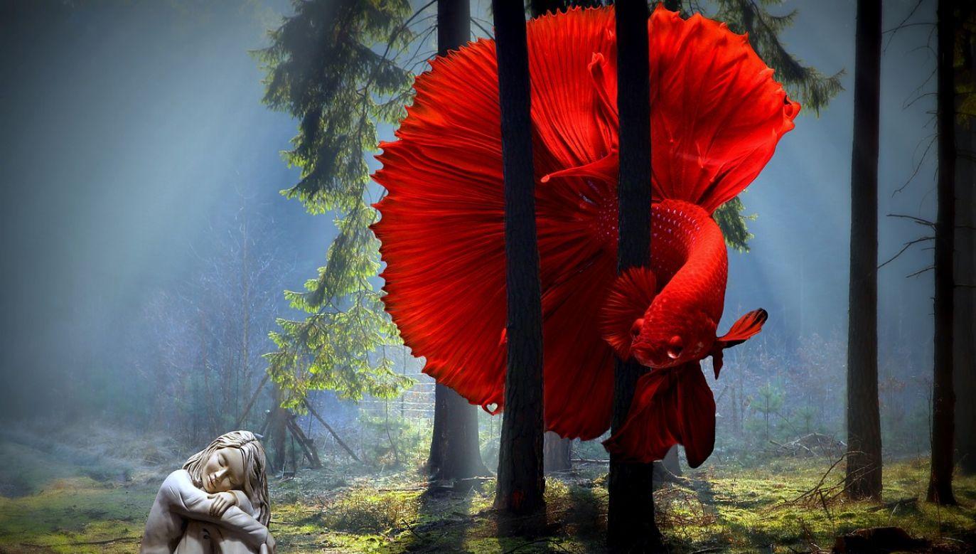 Naukowcy zdają sobie sprawę, że ryby wchodzą w stan przypominający sen (pixabay/varun_maharaj)