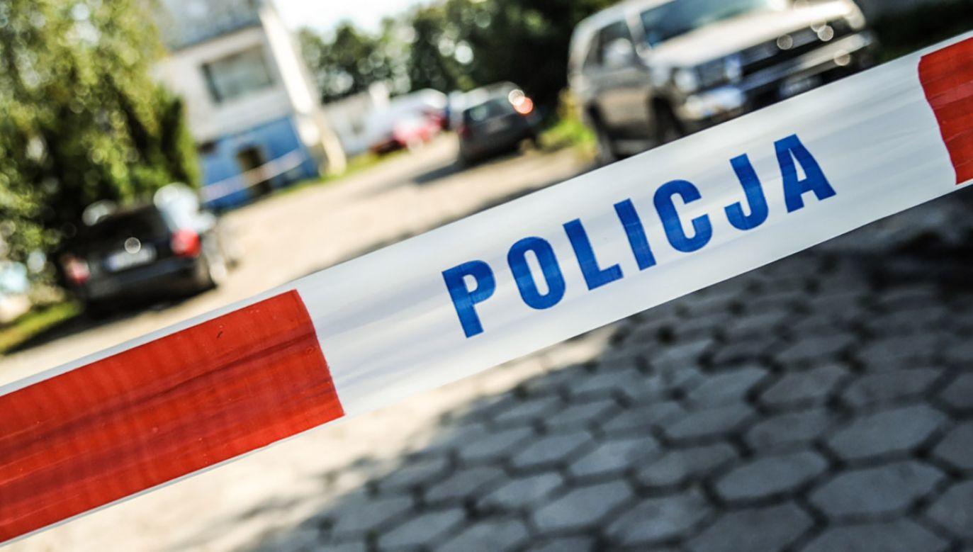 Kotce udało się uciec, ale jej młode nie przeżyły (fot. policja.pl)