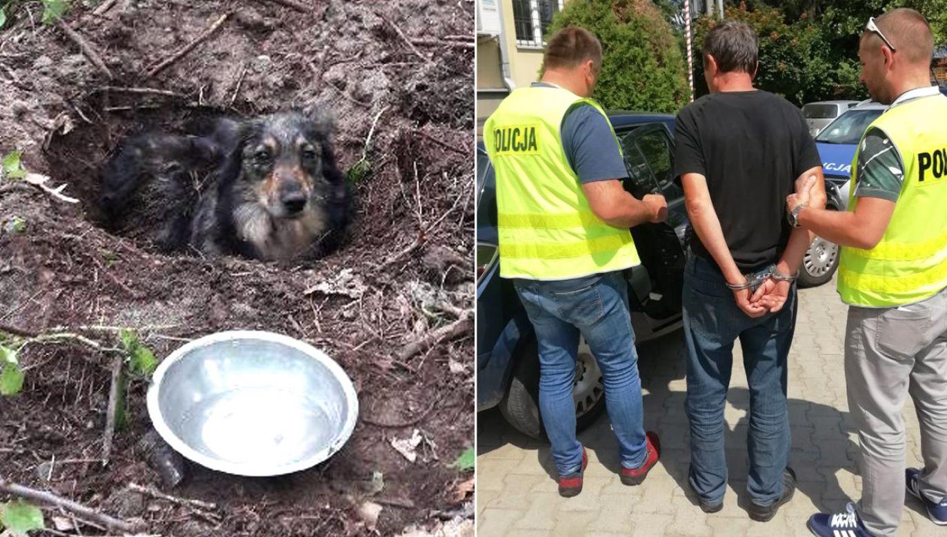 Właściciel psa początkowo przyznał się do zakopania zwierzęcia, a potem zmienił zeznania  (Fot. Policja podkarpacka)