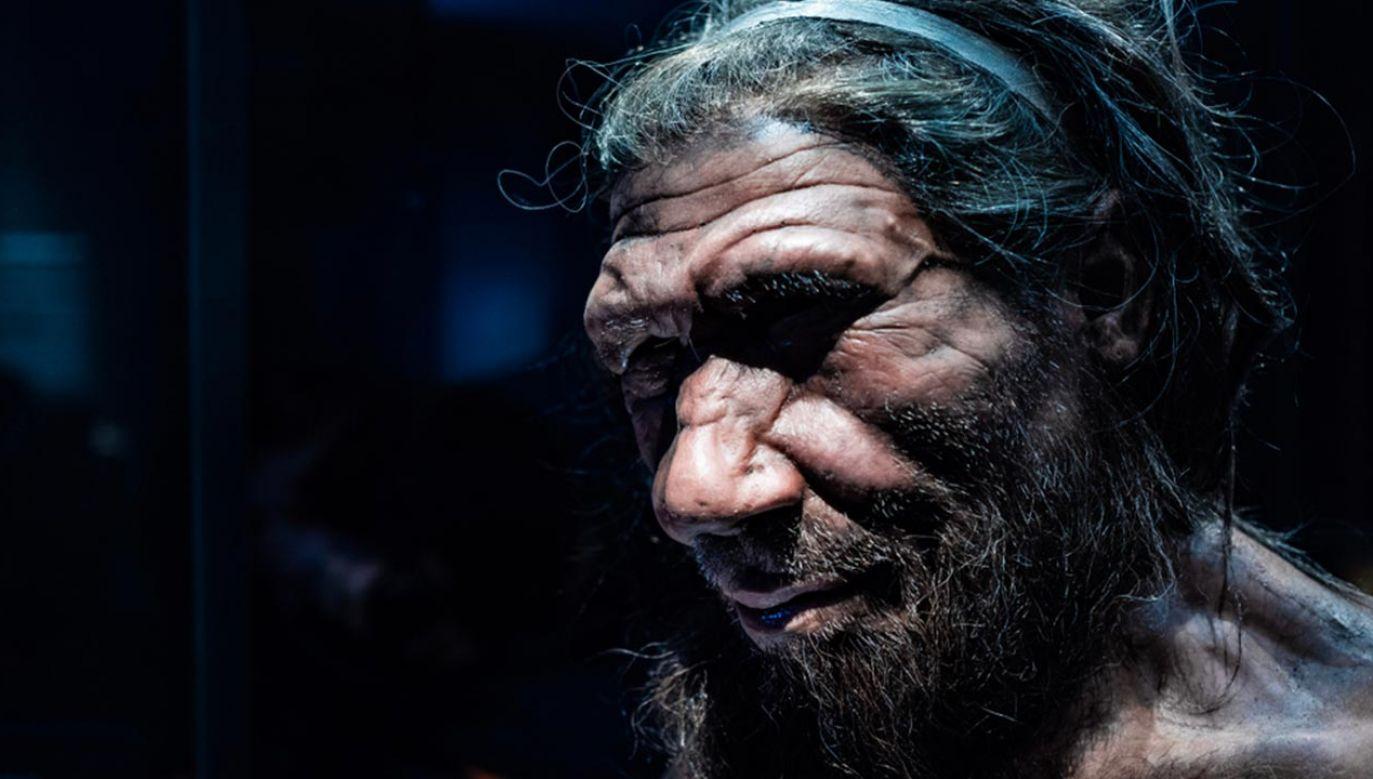 Archeolodzy odnaleźli ślady neandertalczyka w Iłży (fot. Shutterstock/Chettaprin.P)