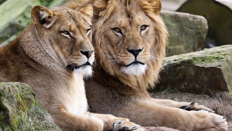 Dzikie zwierzęta uciekły z zoo. Wśród nich tygrysy, lwy i ...