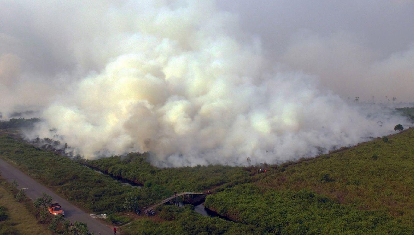 Ogień strawił do końca lipca 320 tys. hektarów lasów (fot. PAP/EPA/ARIO TANOTO)