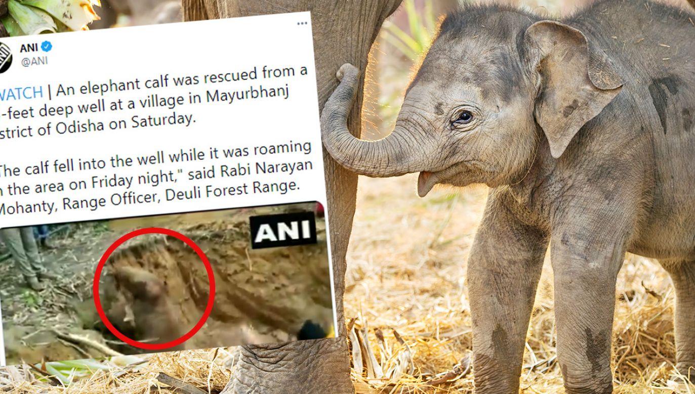 Mały słoń został wyciągnięty przy pomocy koparki i lin (fot. Shutterstock; TT)